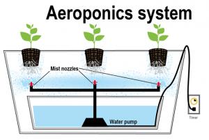 Aeroponic system